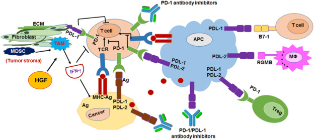 Multifunctional Nanoparticles For Cancer Immunotherapy A