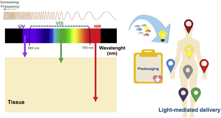 Light-triggered release of photocaged therapeutics - Where
