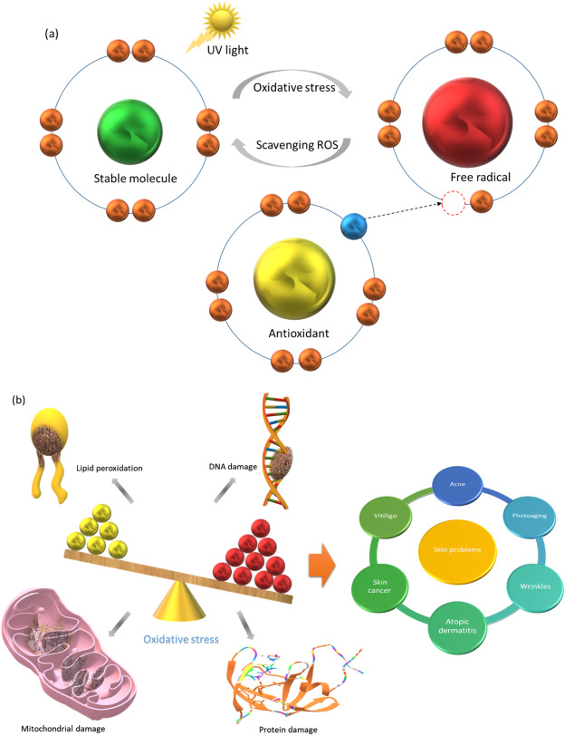 Liposomes for delivery of antioxidants in cosmeceuticals