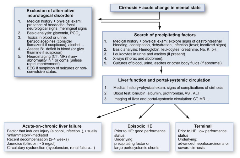 New assessment of hepatic encephalopathy sciencedirect approach to patients fandeluxe Gallery