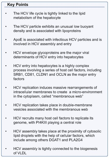 Virology and cell biology of the hepatitis C virus life
