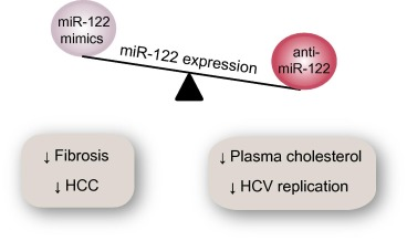 mir 122 a key factor and therapeutic target in liver disease