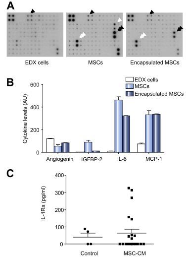 Microencapsulated human mesenchymal stem cells decrease