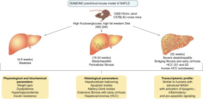 A diet induced animal model of non alcoholic fatty liver disease and graphical abstract ccuart Choice Image