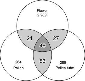 Analysis of expressed sequence tags from petunia flowers sciencedirect a venn diagram illustrating the overlapping expression of genes found in the budflower pollen and pollen tube pug sets numbers in overlapping regions ccuart Choice Image
