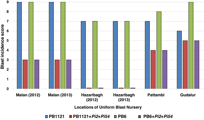 Improvement of Basmati rice varieties for resistance to