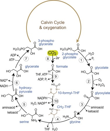 Daring Metabolic Designs For Enhanced Plant Carbon Fixation