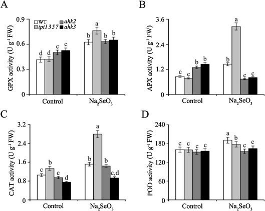 The role of cytokinin in selenium stress response in Arabidopsis