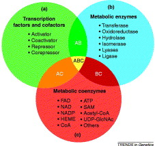 Metabolic Enzymes And Coenzymes In Transcription A Direct Link
