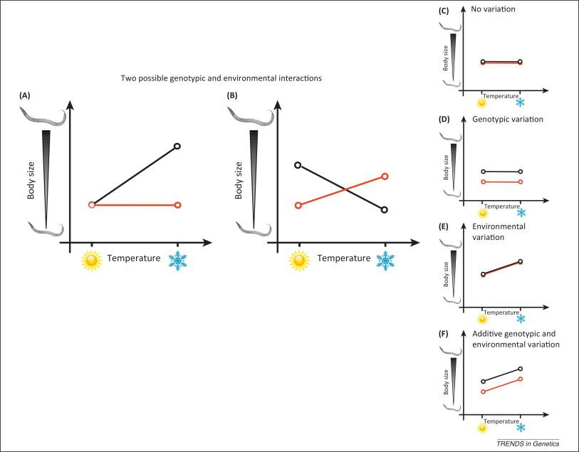 Gene Environment Interaction >> The Genomic Determinants Of Genotype Environment Interactions In