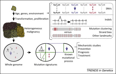 Dissecting genetic and environmental mutation signatures