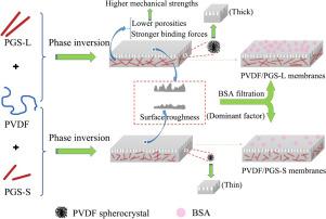 Polyvinylidene fluoride/palygorskite composite ultrafiltration membranes