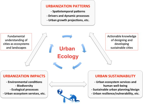 Urban ecology and sustainability: The state-of-the-science