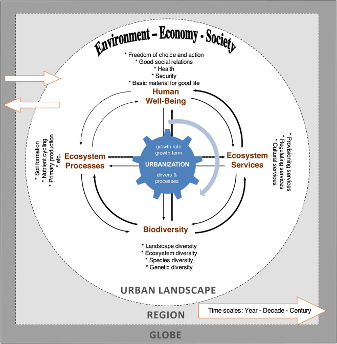 Urban ecology and sustainability the state of the science and a conceptual diagram illustrating the relationships among biodiversity ecosystem processes or ecosystem functions ecosystem services ccuart Gallery