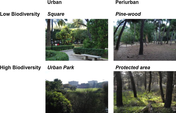 Go Greener Feel Better The Positive Effects Of Biodiversity On The