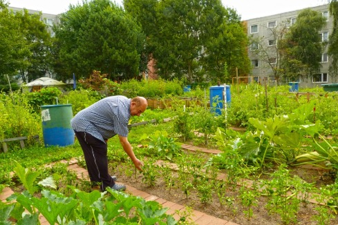 Urban Community Gardens An Evaluation Of Governance Approaches And Related Enablers And Barriers At Different Development Stages Sciencedirect