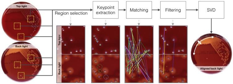 Automatic hemolysis identification on aligned dual-lighting