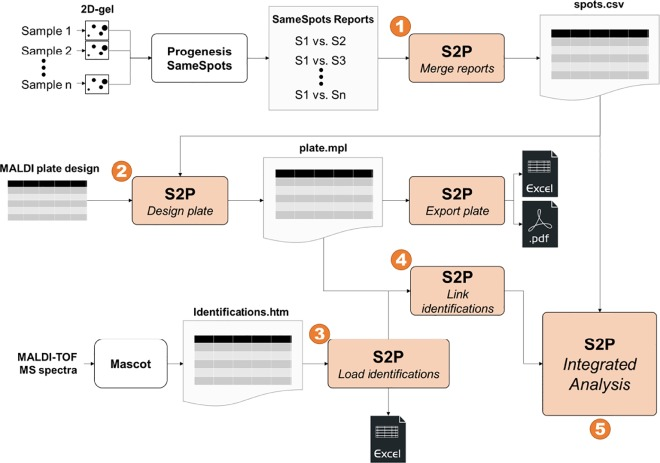 S2P: A software tool to quickly carry out reproducible