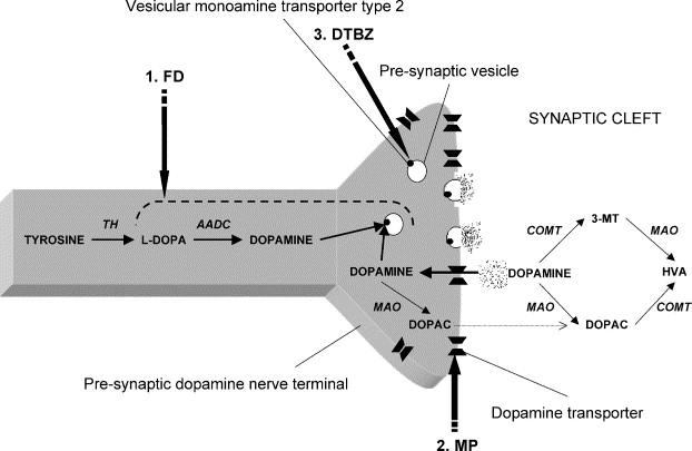 Parkinsons Disease Progression >> Parkinson S Disease In Vivo Assessment Of Disease Progression Using