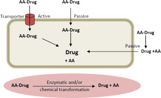 Amino acids as promoieties in prodrug design and development