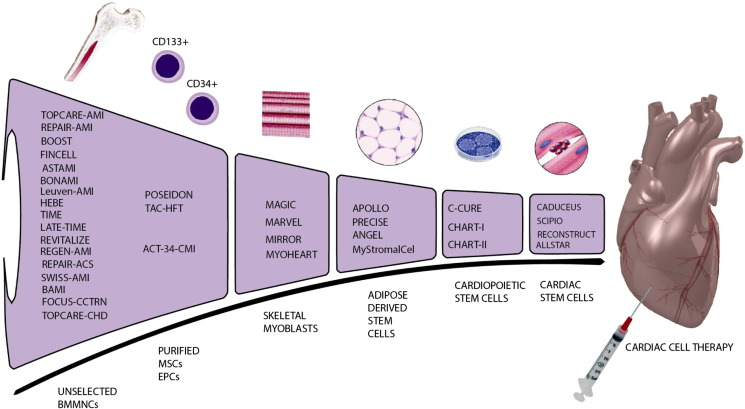 Drug and cell delivery for cardiac regeneration - ScienceDirect