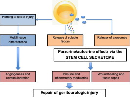 Stem cells as drug delivery methods: Application of stem cell