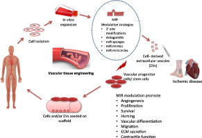 MicroRNAs in vascular tissue engineering and post-ischemic