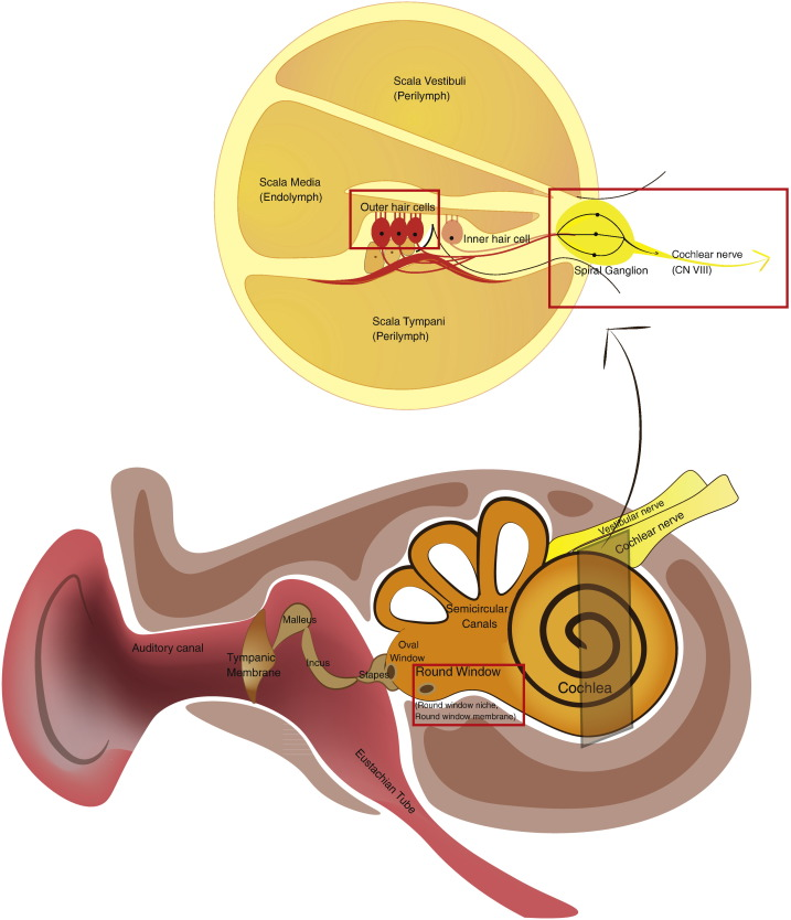Advances in nano-based inner ear delivery systems for the treatment ...