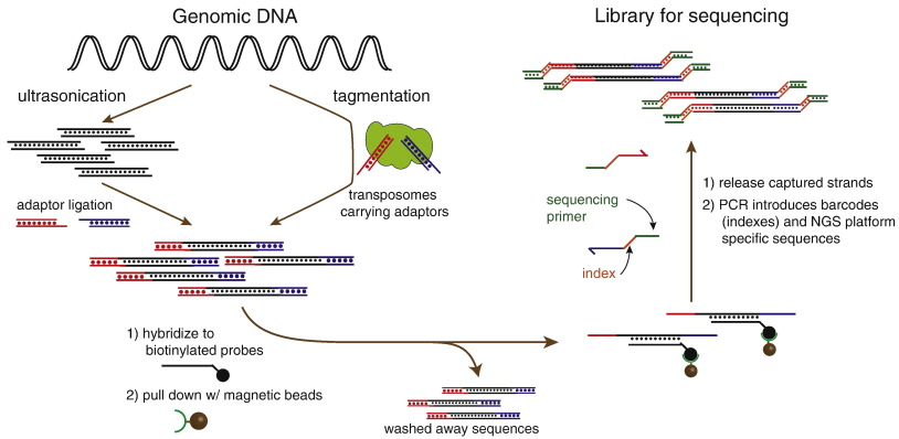 Diagnostics based on nucleic acid sequence variant profiling: PCR