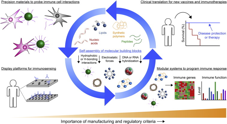 Engineering Self Assembled Materials To Study And Direct Immune