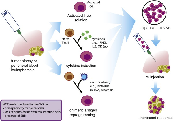 Engineering challenges for brain tumor immunotherapy