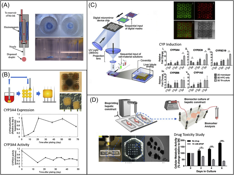 3D bioprinting of functional tissue models for personalized drug