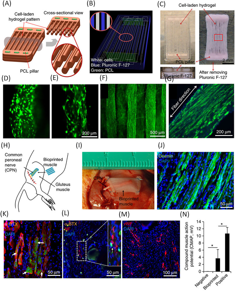 3d Bioprinting Of Tissues And Organs For Regenerative Medicine Receiver With A Tunable Parallel Resonant Circuit Google Patents Download Full Size Image