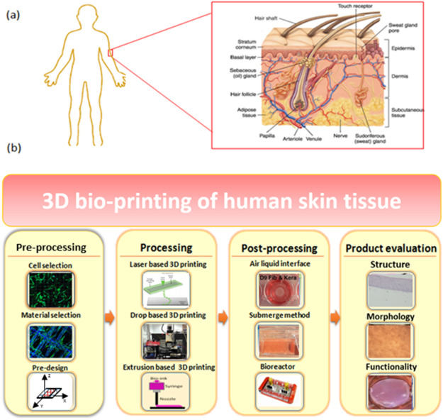 3D bioprinting of skin tissue: From pre-processing to final product