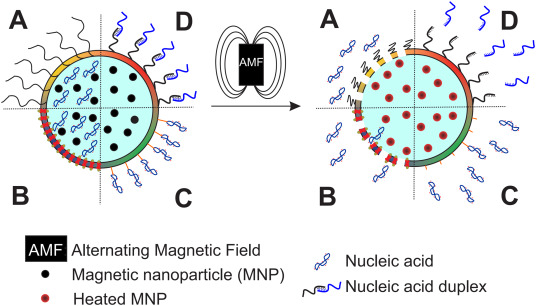 Advances on non-invasive physically triggered nucleic acid delivery