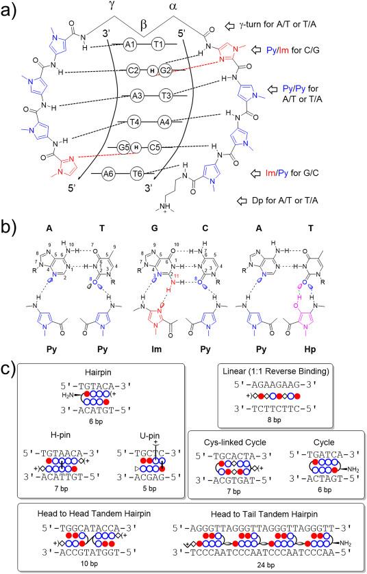 Therapeutic gene regulation using pyrrole–imidazole