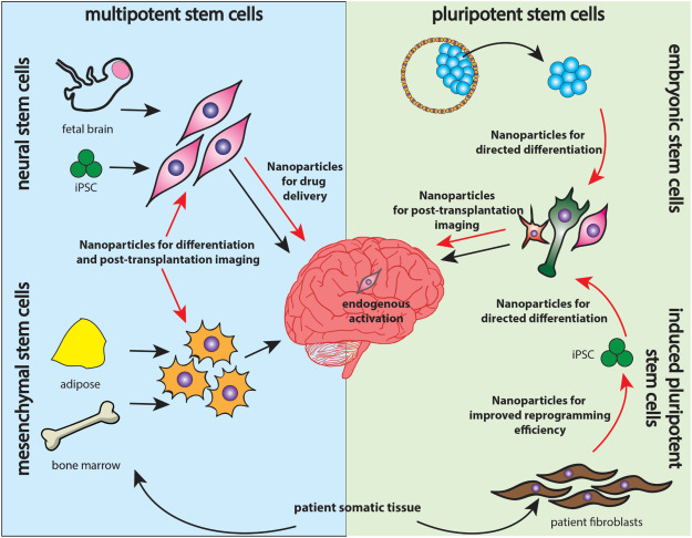 Nanoparticle technology and stem cell therapy team up
