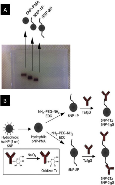 Ligand density on nanoparticles: A parameter with critical