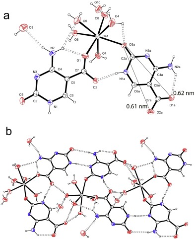 Self Assembling Of Calcium Salt Of The New Dna Base 5