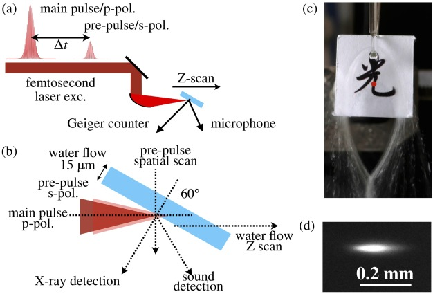 Correlated emission of X-ray and sound from water film