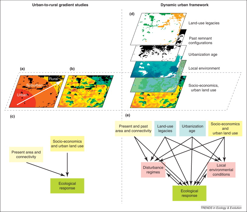 Time for a change: dynamic urban ecology - ScienceDirect