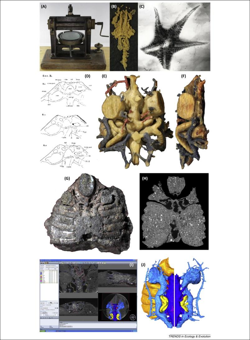 Virtual lab fossil dating
