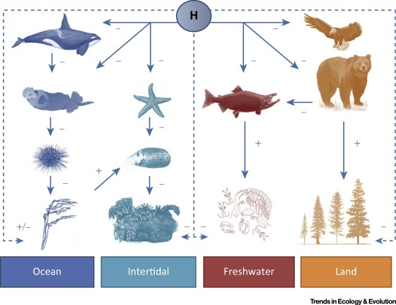 Humans as a Hyperkeystone Species - ScienceDirect