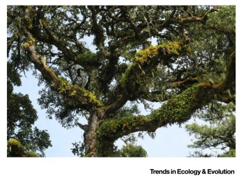 Figure I & Forests and Their Canopies: Achievements and Horizons in Canopy ...