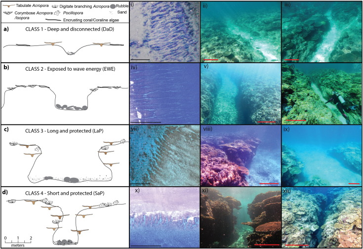 A morphometric assessment and classification of coral reef