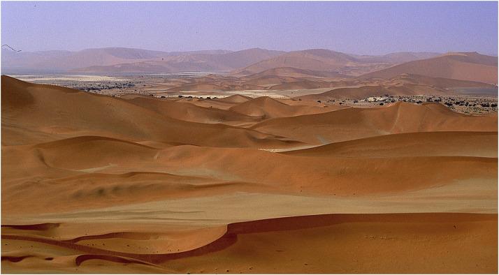 sands of oblivion 2007 download