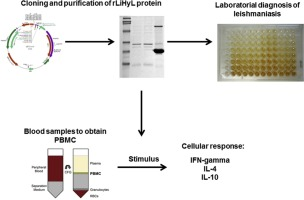 A biomarker for tegumentary and visceral leishmaniasis based on a