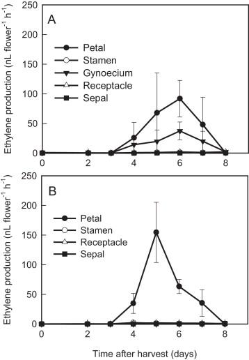 gynoecium ethylene production associated with petal senescence in carnation