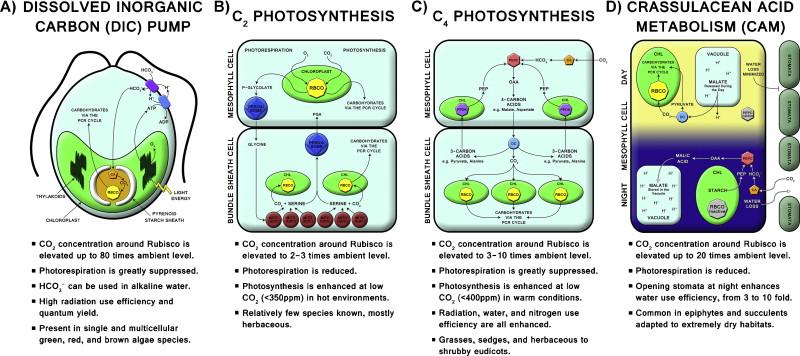 Photosynthetic Diversity Meets Biodiversity The C4 Plant Example