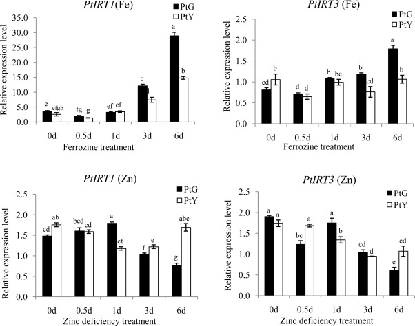 relative expression levels of the ptirt genes in root tissues of ptg and pty at various exposure times to iron or zinc deficiency